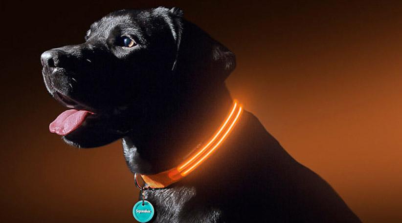 10 BEST LED DOG COLLARS FOR NIGHT WALKS