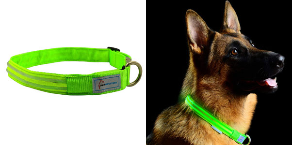 5. Pet Industries LED Collar with Metal Buckle