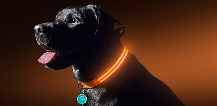 Best LED Dog Collar