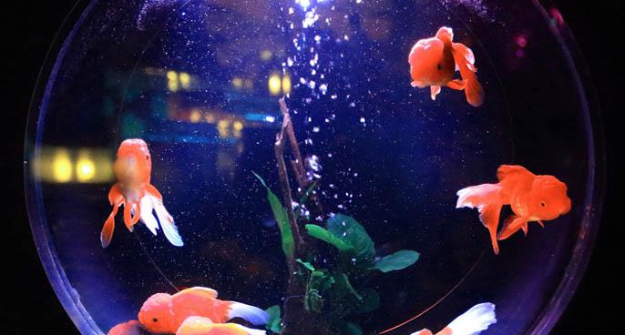 Aquarium LED Lighting Sizes