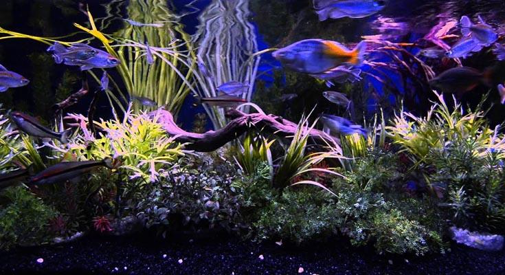 Aquarium Night Time Mode