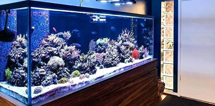 Best Aquarium Lighting LED