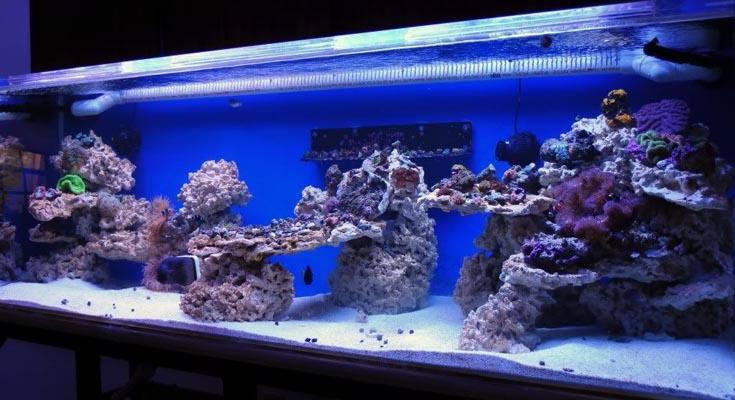 Best Lighting for Fish Tank Lights
