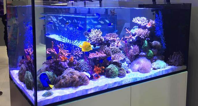 Different Color Temperatures for LED Aquarium Lighting
