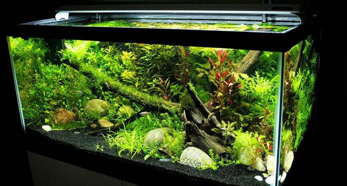 Finnex Planted+ 24 7 Automated Aquarium LED