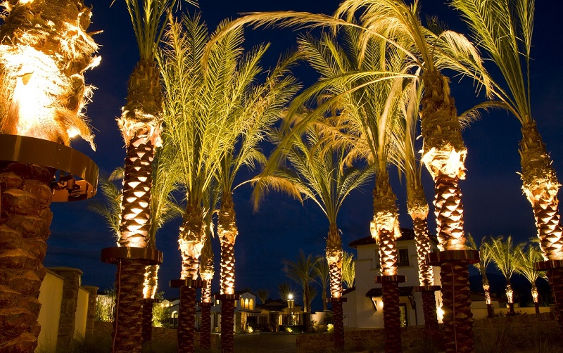 Best Palm Tree Christmas Lights How To Decorate Trees